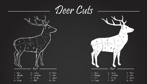 deer-venison