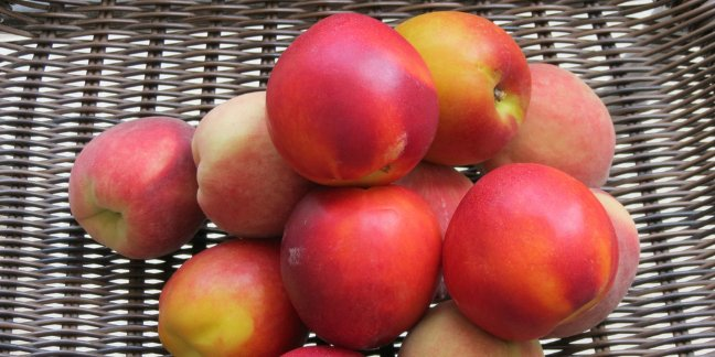 Find out how easy it is to make your own baby food from peaches and nectarines!